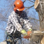 tree-work