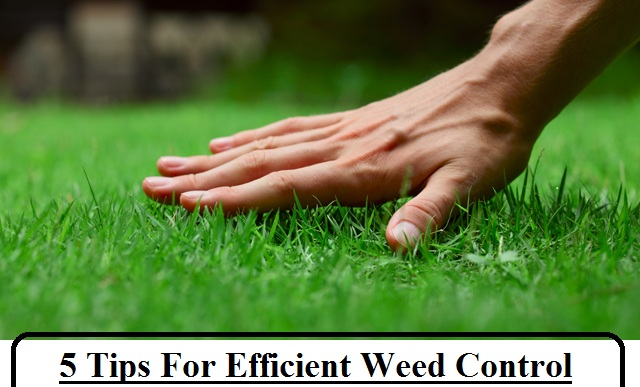 weed-control
