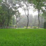 Lawn-View2