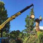 Tree work birmingham homepage